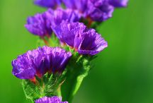 Purple, Lilac & Blue Flowers / Purple Is Very Fashionable At The Moment