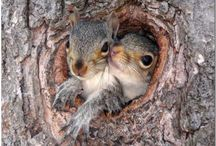 cute animals / by CECILIA GIBSON