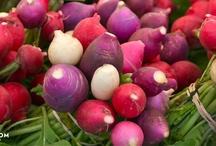 Westport Farmers Market / by Fresh Nation