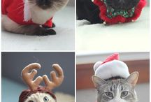 Happy Holidays! / Christmas and Pets