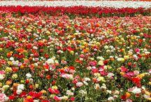 Flores para el alma