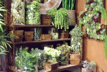 Indoor and outdoor plants for small apartments and balconies