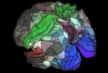 Brain ontwikkeling en research
