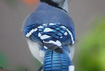 Фото - Птицы