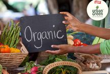 Organic farming /  Go for organic farm vegetables to get maximum health benefits.