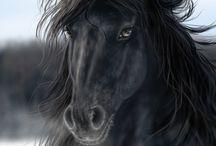 Friesian Horses/Horses