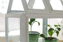 terrarium frames