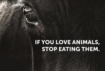 Love animals, don't eat them.