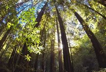 Mount Tamalpais State Park / by CA State Parks