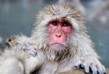 Monkeys! Primates! Gibbons!