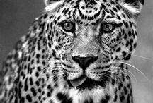 Animals / Beautiful animals to share.
