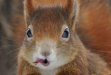Animalia / by Lizzie Verney