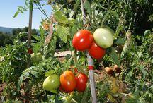 Le Potager du Chef / En agriculture raisonnée, des fruits, des légumes et des herbes fraîches pour la cuisine de Christophe Renaud