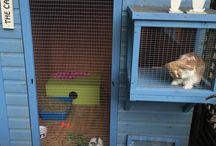 Bunny hutches