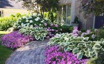 Landscaping - Side Garden
