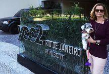 Hotéis Pet Friendly / Hotéis, pousadas e resorts que aceitam animais.