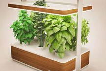 Culteev - Basile, smart indoor garden / Discover Basile in action !