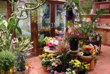 Birthday Flowers / Birthday Flowers by Royal Fleur Florist. http://www.royal-fleur.com/birthday   #birthdayflowers, #flowers