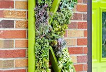 Plante suculente - pereti verzi - tablouri verzi