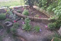 garden / my garden and my flowers