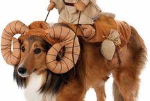 Halloweenkostym till djur