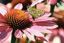 Fun Critters / The birds and the bees... and butterflies, frogs and more!