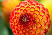 Flowers - Amazing World