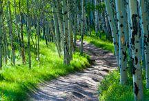 Camino del Bosque.