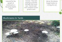 Good Gardening Tips / Helpful tips and advice for Texas gardeners.