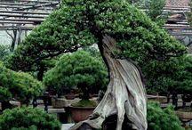 Trees / by Vera Sweeney (Ladyandtheblog.com)