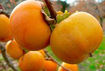 Fruits & Fruit Trees