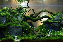 aquascape_