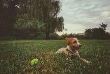 lilyrosedog