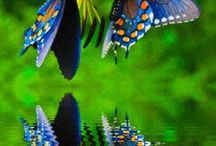 Nature / Nature related  butterflies art related