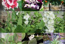 Siemenestä kasviksi! / Tässä taulussa on siemenestä kasvattamieni kasvien kuvia! Here are the plants that I have grown from seeds.