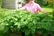 Gardening, landscaping, yard, indoor plants