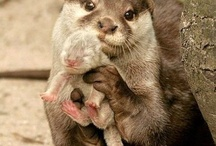 Otterly cute / by Adrienne MacLeod