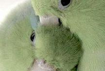 1. Parrots