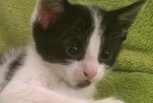 Scumpi, our cat....