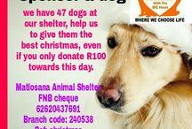 matlosana animal shelter (no kill facility)