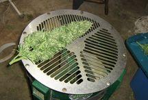 Harvesting, Trimming & Drying