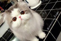 Citty Cat