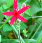 Wildflowers / by Denise Thomason