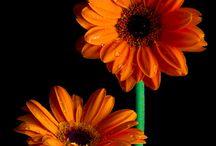 Favourite flowers.