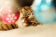 Christmas Kitty Cheer