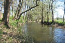 Rzeka Marycha
