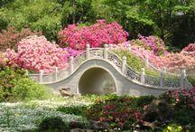 Gardens & Scenes
