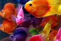 fishes..fishes