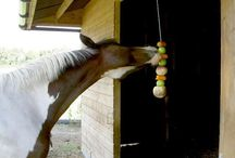 Horse treats and food