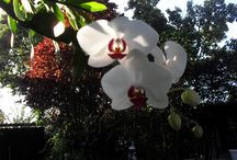 Flores  / Flores no quintal
